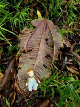62 George found a ginormous leaf!